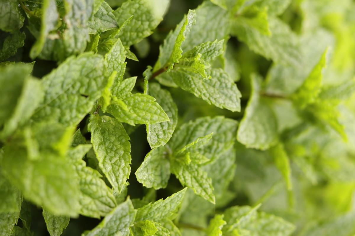 Soupe de fraises la menthe au cook expert une pinc e - Salade a couper qui repousse ...
